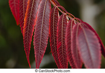 Crimson Leaves of Autumn
