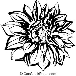 crisantemo, bosquejo, negro, blanco