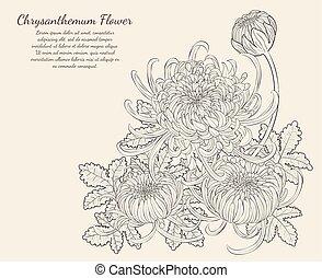 crisantemo, flor