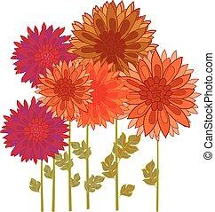 crisantemo, flor, element.