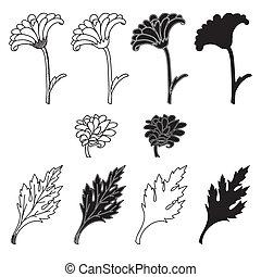 crisantemo, hojas, flores