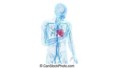 crise cardiaque, avoir, homme