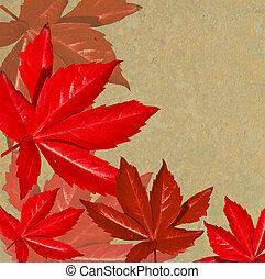 Crisp Fall Background with Orange Leaves