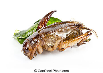 crispy fried insects - Protein rich food