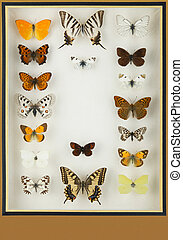 Cristal box with preserved colored butterflies. Vertical...
