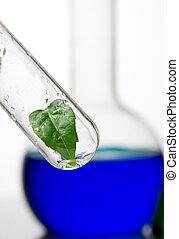 cristalería laboratorio, planta