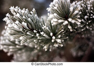 cristales, invierno, pino, hielo