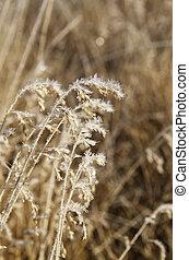 cristaux, gelée, herbe