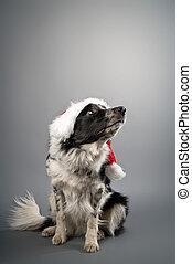 cristmas dog