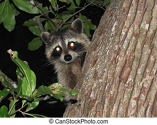 critters - I caught this little guy following me out of the ...