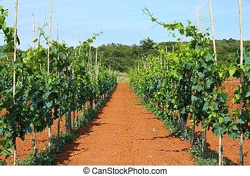 Croatia agriculture