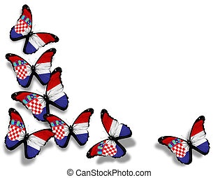 Croatian flag butterflies, isolated on white background