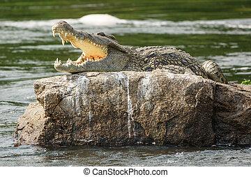 crocodile, à, ouvrez bouche, dans, nil
