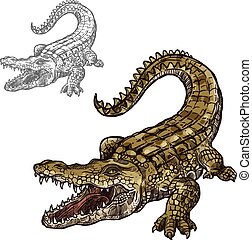 Crocodile alligator vector isolated sketch icon - Crocodile...
