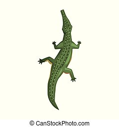 Crocodile, amphibian animal, view from above cartoon vector Illustration