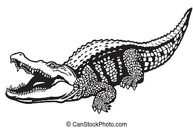 crocodile, blanc, noir, nil