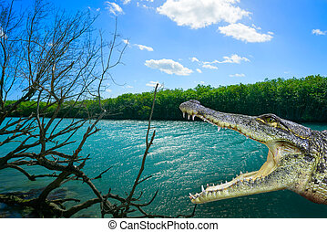 crocodile, cancun, lagune, photomount