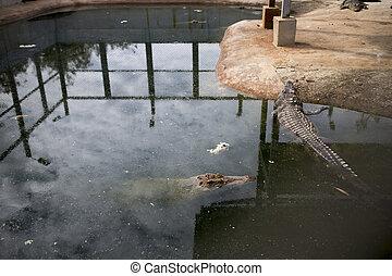 Crocodile farms.