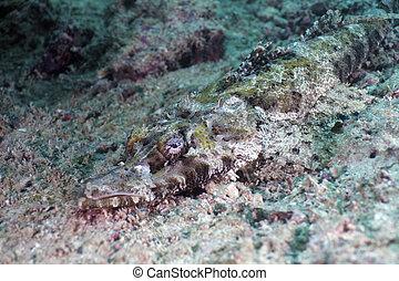 crocodile-fish