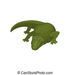 Crocodile, green amphibian animal vector Illustration on a white background