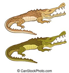 Crocodile green and brown. Vector cartoon image isolated on...