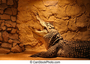 crocodile in a terrarium
