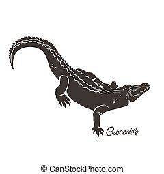 Crocodile isolated on a white background. Vector graphics.