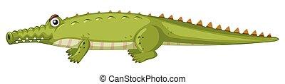 Crocodile on white background