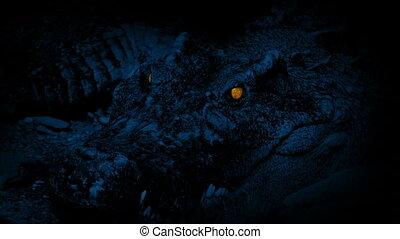 Crocodile Opens Mouth Glowing Eyes - Huge crocodile with...