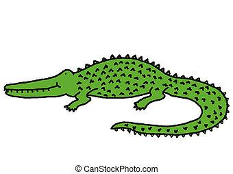 Crocodile - Smiling crocodile, animal series, illustration,...