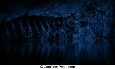 Crocodile Tail Submerged At Night - Closeup of scaly...