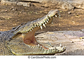 Crocodiles jaws, Kankariya zoo in Ahmedabad