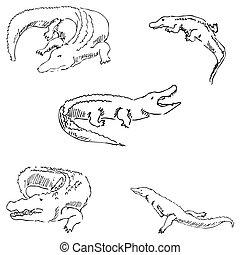 Crocodiles. Sketch pencil. Drawing by hand. Vector