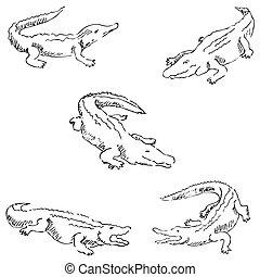 Crocodiles. Sketch pencil. Drawing by hand Vector