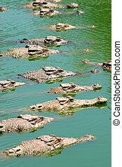 Crocodiles waiting in the sun