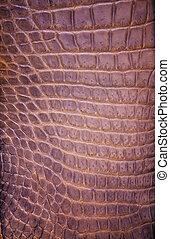 crocodilo, freshwater, textura, fundo, pele
