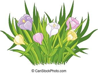 Illustration of beautiful crocus bouquet
