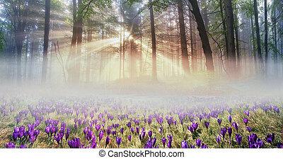 crocus, flower-, solaire