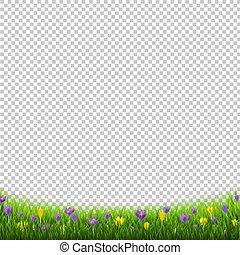 Crocus Flowers Border With Grass Transparent Background