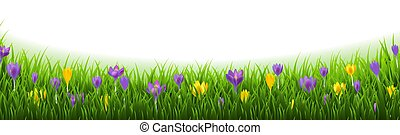 Crocus Flowers Border With Grass