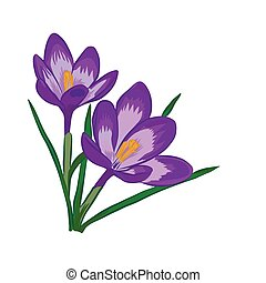Crocus flowers. Elegant vintage card. - Hand drawn crocus...