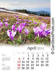crocus, montagnes, fleur, Printemps, calendrier, avril, 2014...