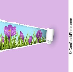 crocus, pelouse, feuille, nature, printemps, déchiré, isolé, papier, vert, violet, floral, violet., herbe
