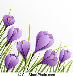 Crocuses. Paper flowers on white background - Crocuses....