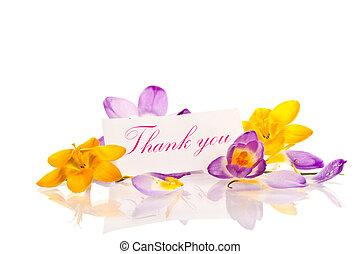 Crocuses with gratitude
