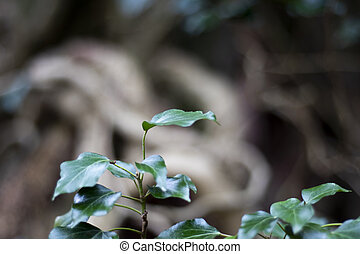 croissance, printemps