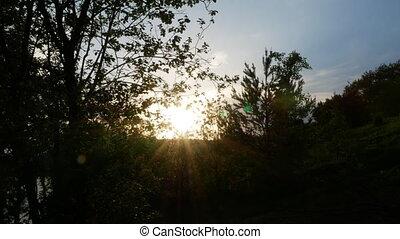 croissant, arbre, 4k, levers de soleil