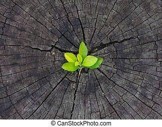 croissant, arbre, plante, souche, dehors