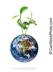 croissant, bébé, plante, la terre