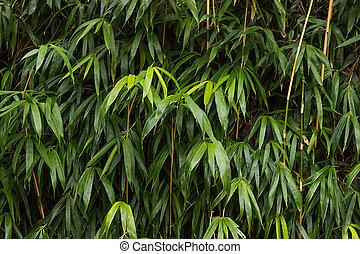 croissant, bambou